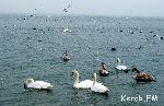 За два дня в Восточном Крыму насчитали 40 тысяч зимующих птиц.