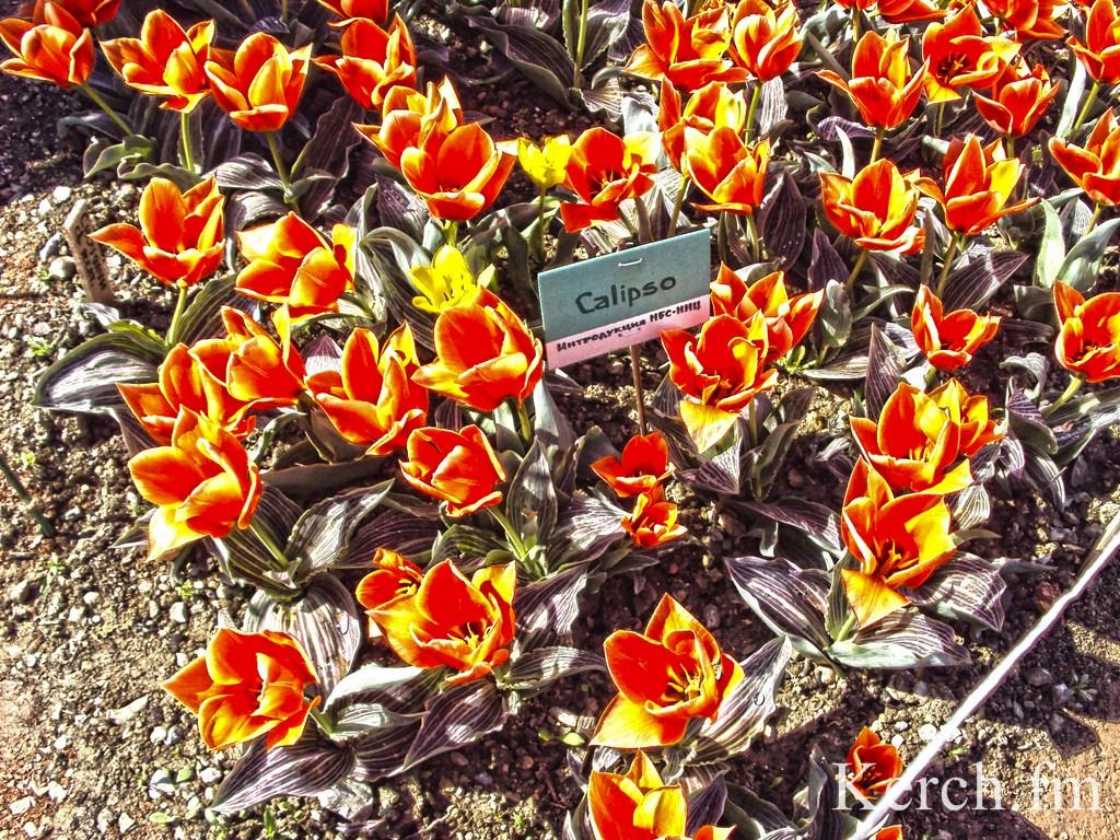 """""""Парад тюльпанов"""" в Никитском ботаническом саду. КрымФАН."""