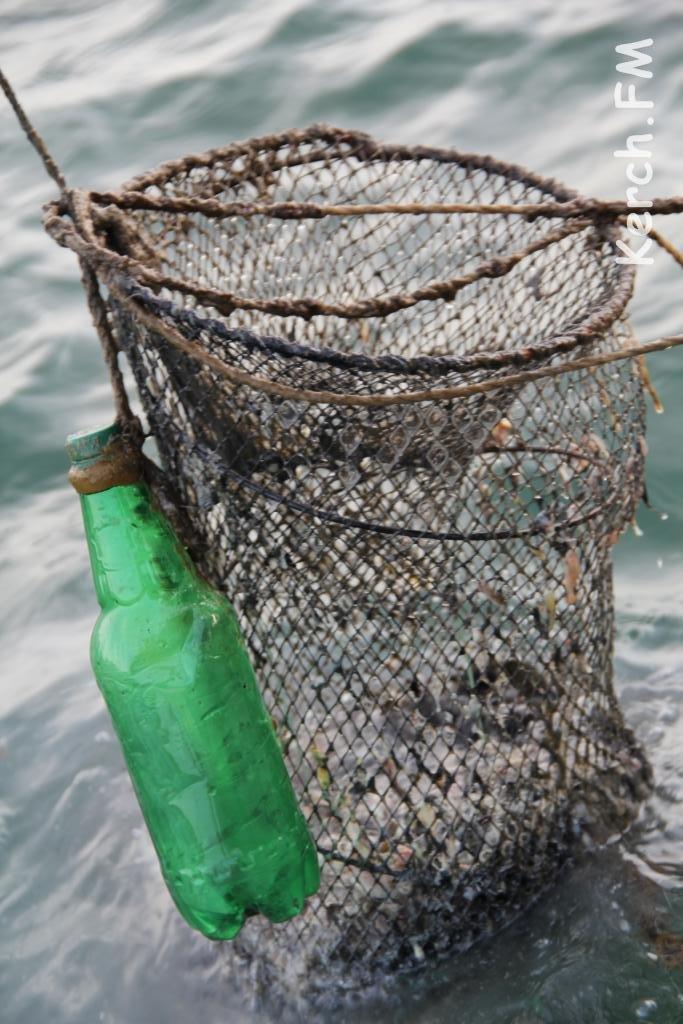 сердце светящихся орудия лова планктона фото эти фото приколы