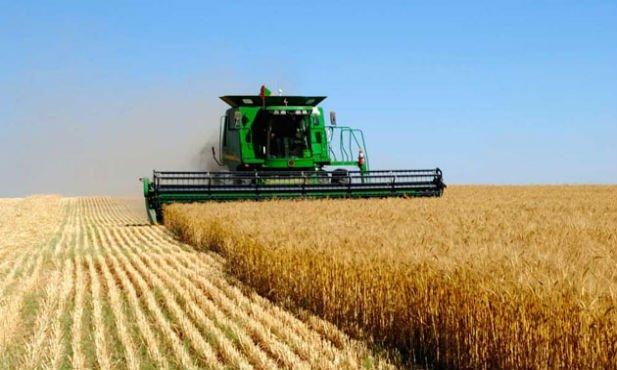 ВРостовской области приступили куборке ранних зерновых культур