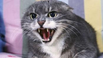 Случай бешенства домашней кошки зарегистрирован в Крыму